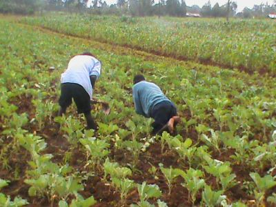 Horticulture-for-Income-generation
